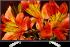 Sony Bravia KD-55XF8599