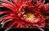 Sony Bravia 65XG8599