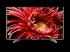 Sony Bravia KD-85XG8596